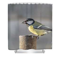 Great Tit On The Tube Shower Curtain