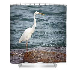 Great White Heron Shower Curtain by Elena Elisseeva