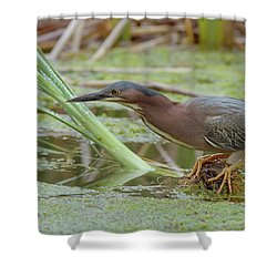 Green Heron Shower Curtain by Doug Herr