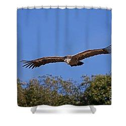 Griffon Vulture Gyps Fulvus Shower Curtain