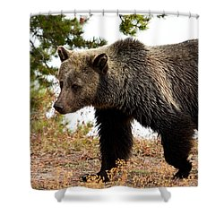 Grizz Shower Curtain