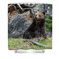 Grizzly Manor Shower Curtain