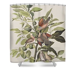 Ground Dove Shower Curtain