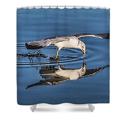 Gull Reflection Shower Curtain