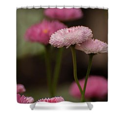 Shower Curtain featuring the photograph Habanera English Daisy by Brenda Jacobs