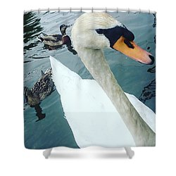 Hakucho Means Swan  Shower Curtain