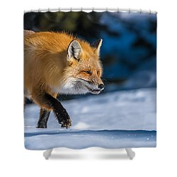 Shower Curtain featuring the photograph Handsome Mr. Fox by Yeates Photography
