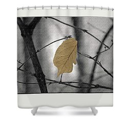 Hanging In The Balance Shower Curtain by Sue Stefanowicz
