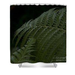 Hapuu Pulu Hawaiian Tree Fern  Shower Curtain by Sharon Mau