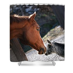 Shower Curtain featuring the photograph Hello Friend by Angela Rath