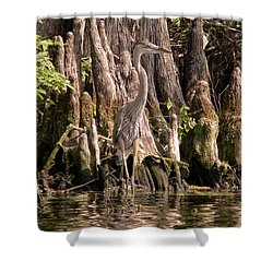 Shower Curtain featuring the photograph Heron And Cypress Knees by Steven Sparks