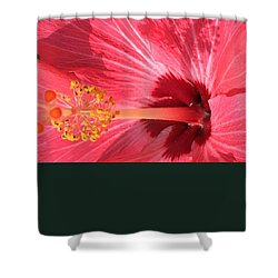 Shower Curtain featuring the photograph Hibiscus by Kay Gilley