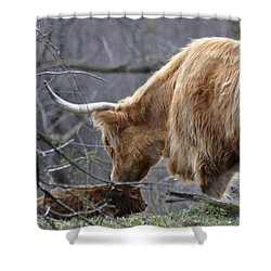 Highland New Born Shower Curtain