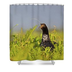 Horned Screamer Shower Curtain