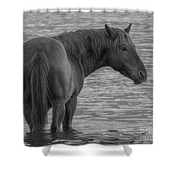 Horse 10 Shower Curtain