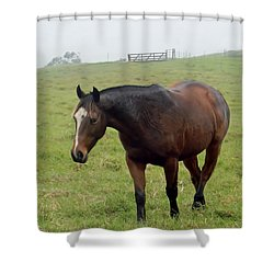 Horse In The Fog Shower Curtain by Pamela Walton
