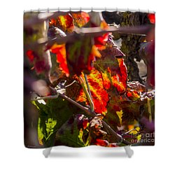 Hot Autumn Colors In The Vineyard 05 Shower Curtain by Arik Baltinester