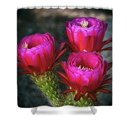 Shower Curtain featuring the photograph Hot Pink  by Saija Lehtonen