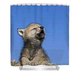 Howling Wolf Cub Shower Curtain
