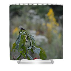 Humming Bird Shower Curtain by Linda Geiger