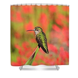 Hummingbird #5 Shower Curtain