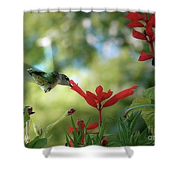Hummingbird Delight Shower Curtain by Sue Stefanowicz