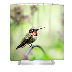 Shower Curtain featuring the photograph Hummingbird II by Christina Rollo