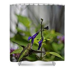 Hummingbird Shower Curtain by Tim Good