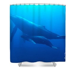 Humpback Mother And Calf Shower Curtain by Ed Robinson - Printscapes