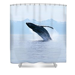 Humpback Whale Breaching Shower Curtain by John Hyde - Printscapes