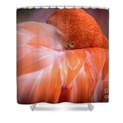 I See You Shower Curtain by Lisa L Silva