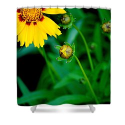 Illumination Shower Curtain by Frozen in Time Fine Art Photography