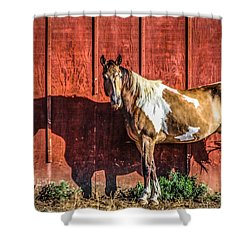 #0783 - Buckskin On Red Shower Curtain