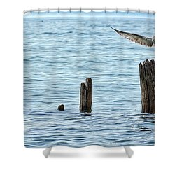 Shower Curtain featuring the photograph In Flight by Nikki McInnes