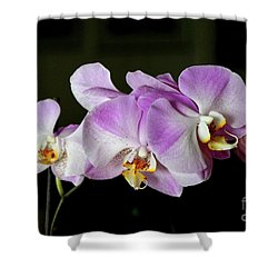 In The Pink Shower Curtain by Mariarosa Rockefeller