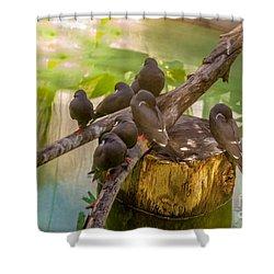 Inca Terns Shower Curtain