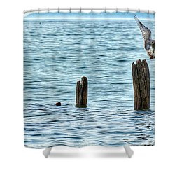 Shower Curtain featuring the photograph Incoming by Nikki McInnes