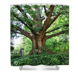 Inwood Ginkgo  Shower Curtain