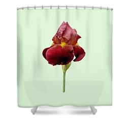 Shower Curtain featuring the photograph Iris Vitafire Green Background by Paul Gulliver