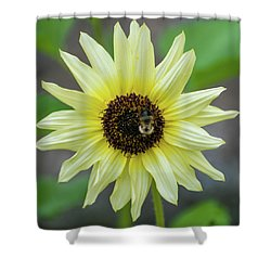 Shower Curtain featuring the photograph Italian Sunflower by Brenda Jacobs