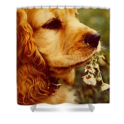 It's Spring Shower Curtain
