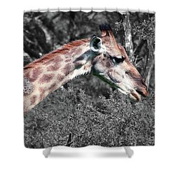 I've Got Stories To Tell Shower Curtain