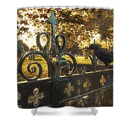 Jackdaw On Church Gates Shower Curtain by Amanda Elwell