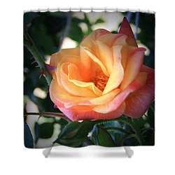 Jacob's Rose Shower Curtain by Marna Edwards Flavell
