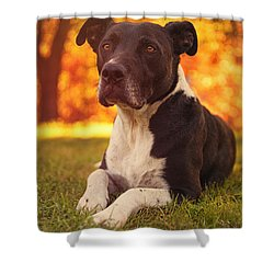 Shower Curtain featuring the photograph Jake  by Brian Cross