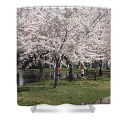 Japanese Cherry Blossom Trees Shower Curtain by April Sims