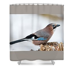 Jay In Profile Shower Curtain by Torbjorn Swenelius