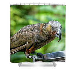 Kaka Shower Curtain