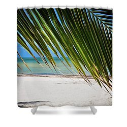 Key West Palm Shower Curtain by Kelly Wade