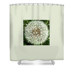 Kind Such As The Flower   Shower Curtain by Sobajan Tellfortunes